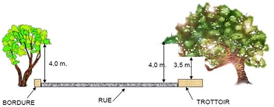Obstruction des voies publiques par les branches