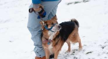 De nouvelles obligations pour tous les propriétaires de chiens dès le 3 mars 2020